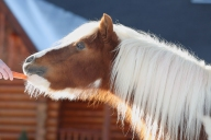 equestrian horse boarding training pipe stalls training arena mare barn