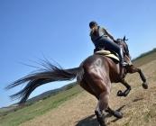 horse training arena pipe stalls boarding equestrian training