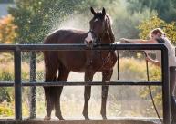 horse boarding wash rack pipe stalls boarding equestrian